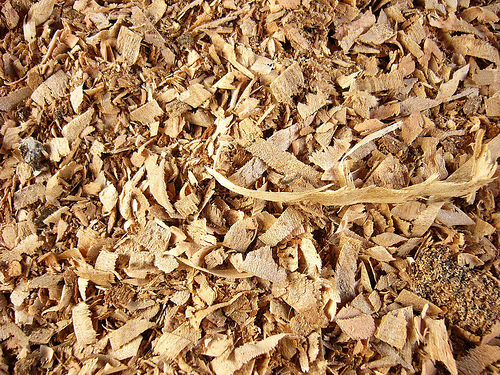 biomasa z upraw energetycznych